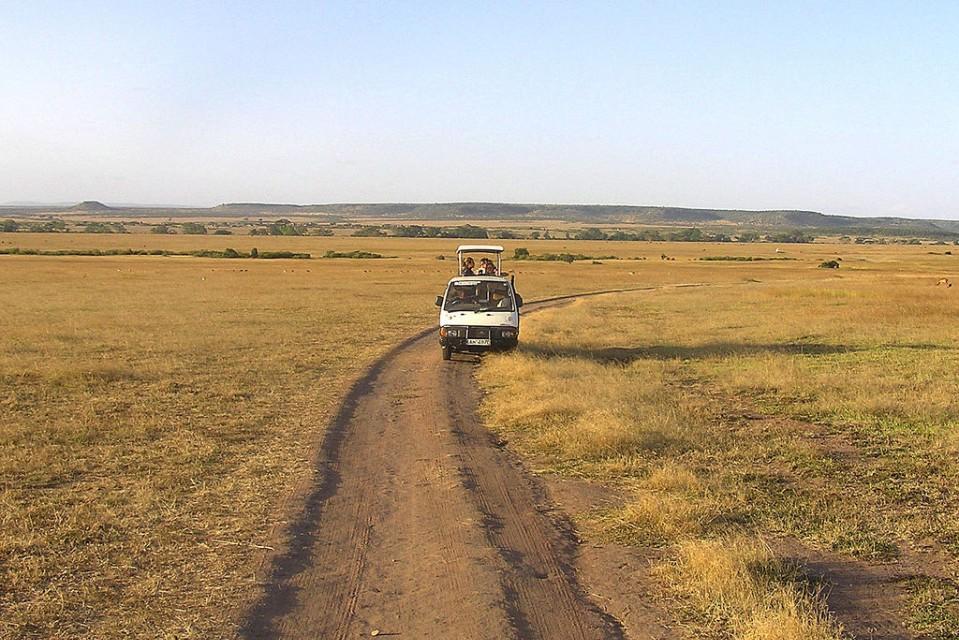 Game Drive in Masai mara